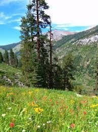 california native garden examples of native landscapes native