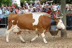 unspunnen festival in interlaken switzerland swiss traditions and