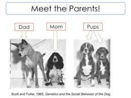 american pitbull terrier vs amstaff pit vs bull