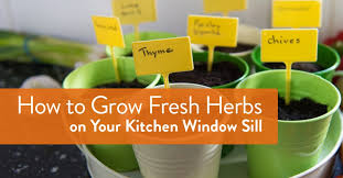 Kitchen Windowsill Plant A Garden On Your Window Sill The Great Room