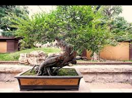 bonsai tree bonsai tree meaning