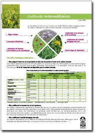 chambre d agriculture bourgogne chambre d agriculture de bourgogne cultures intermédiaires a2c