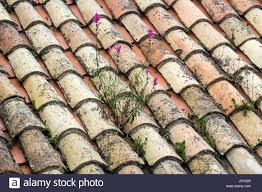 Terracotta Tile Roof Growing On Roof Tiles Stock Photos U0026 Growing On Roof Tiles Stock