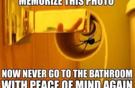 Funny Spiders Memes Of 2017 - scared of spiders funny pictures quotes memes funny images