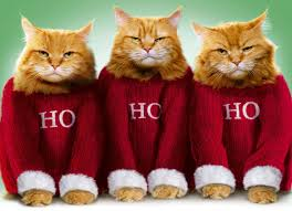 Merry Christmas Cat Meme - 50 cats who want you to take your christmas cheer and shove it