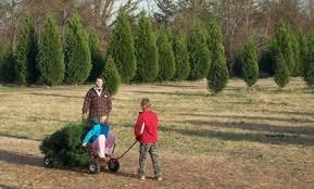 choose and cut christmas tree farms near charlotte nc south