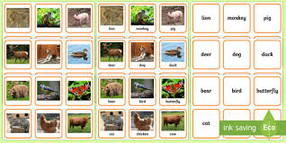 animals photo matching cards animals sorting cards animals