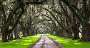 Map Of The Carolinas Usa by South Carolina Usa Holidays U0026 Tourism South Carolina Beaches