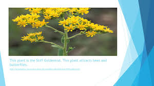 taiga native plants prairie grasslands biome ppt video online download