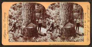 Stae Of Washington Stock Photos by File Cutting Timber In The State Of Washington U S A By Singley