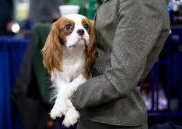 Sneak Peek Behind the Scenes at the 2015 National Dog Show