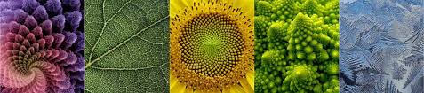 fractal pattern in nature defining creativity the beauty of creativity
