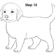 tag for draw a dog to draw a dog step by pets animals free