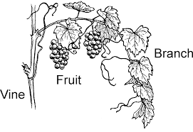 coloring picture of a vine