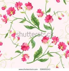 Sweet Pea Images Flower - sweet pea flower stock images royalty free images u0026 vectors
