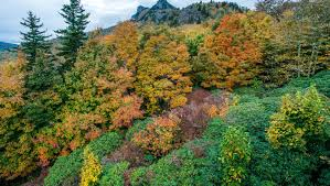fall color 2017 at grandfather mountain