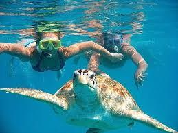 imagenes tortugas verdes avistamiento de tortugas verdes marinas