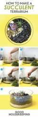 best 10 terrarium plants ideas on pinterest terrarium ideas