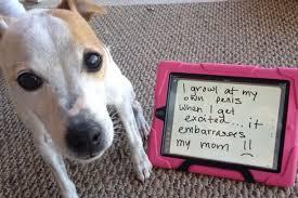 Dog Shaming Meme - pic 1 dog shaming meme guy