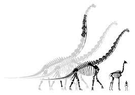 brachiosaurus both bigger and smaller than you think sauropod