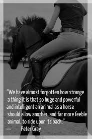 Horse Riding Meme - horse inspirational horse riding horse meme horse quote