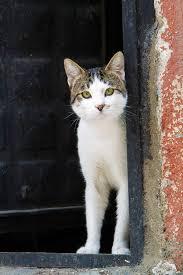 cåt in the window istanbul cats u0026window pinterest cat