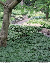 Backyard Ground Cover Options Planting Ground Covers Fine Gardening