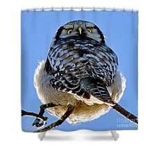 Owl Shower Curtains Northern Hawk Owl Shower Curtains Fine Art America
