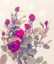 imagenes de rosas vintage pequeñas rosas vintage foto de stock mallivan 44576173
