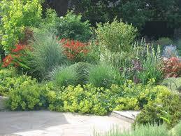 Bushes For Landscaping Landscaping Bushes Whitevision Info