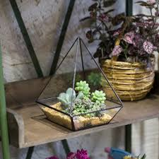 compare prices on terrarium succulent online shopping buy low