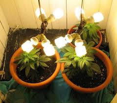 cfl grow lights for indoor plants how to buy cfl grow lights