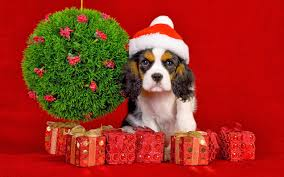christmas presents wallpapers all new wallpaper my christmas gift for dog lovers wallpaper