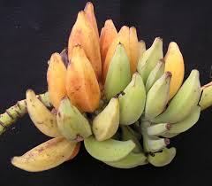 banana basics