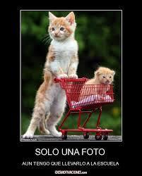 imagenes de gatitos sin frases imágenes de gatitos con frases cortas bonitas para whatsapp