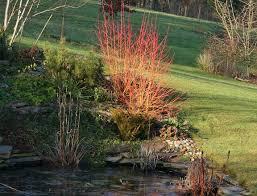 garden world getting the best from your garden in winter