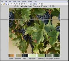 Grapevine Map Sensors Free Full Text Grapevine Yield And Leaf Area