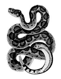 43 rattle snake tattoos