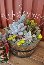 338 best succulent planters images on pinterest succulent