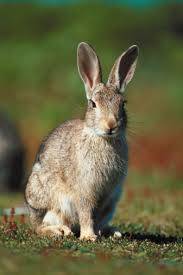 How Do I Get Rid Of Rabbits In My Backyard How To Get Rid Of Rabbits Living Under Your Deck Hunker