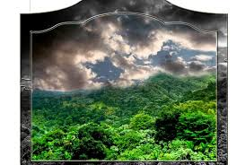 forests wallpapers page 80 naure grove forest trees nature