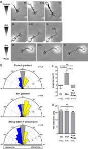 Sonic Hedgehog Guides Axons Via Zipcode Binding Protein 1 Mediated