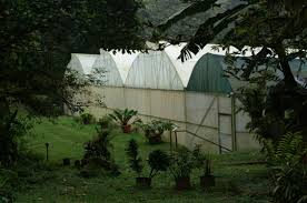 woodbrook native plant nursery a personal permaculture revolution my own personal jungle