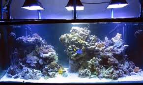 Tank Aquascape Simple And Effective Guide On Reef Aquascaping News Reef Builders