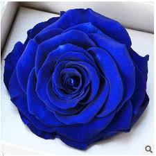 blue roses for sale sale color preserved fresh flower high end gift box for