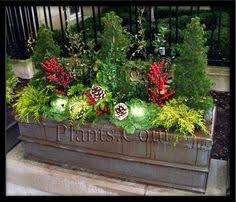 Plants For Winter Window Boxes - winter window box boxwoods ivy pinecones u0026 evergreens garden