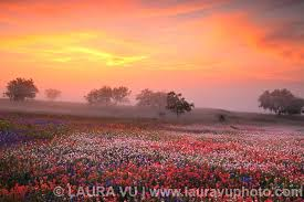 Texas scenery images Texas landscape photography texas wildflowers pictures texas jpg