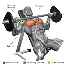 Max Bench For Body Weight Working Out Theme This Picture Inspires Me To Work On My Bench