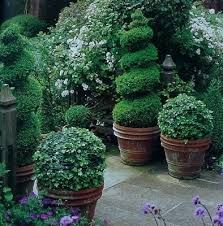 Topiaries Plants - 202 best topiaries u0026 urns images on pinterest topiaries plants