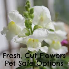 Poisonous Garden Flowers by Pet Safe Fresh Cut Flowers Options